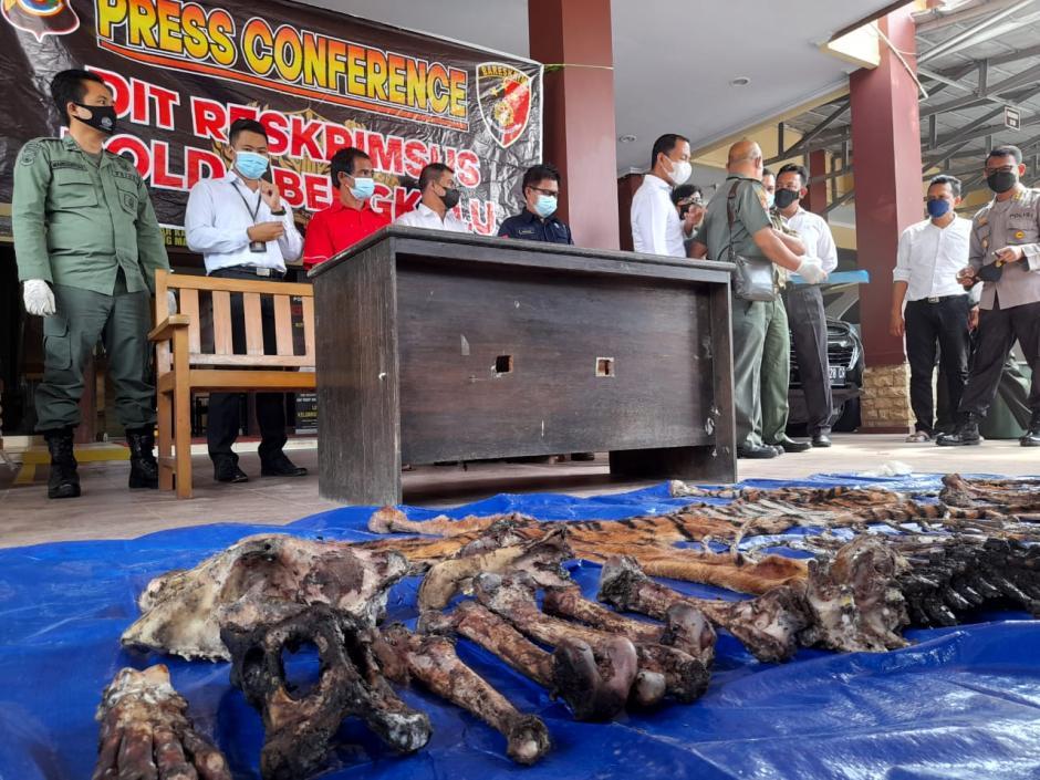 Miris, Kulit dan Tulang Harimau Sumatera Ini Dijual Seharga Rp80 Juta-0
