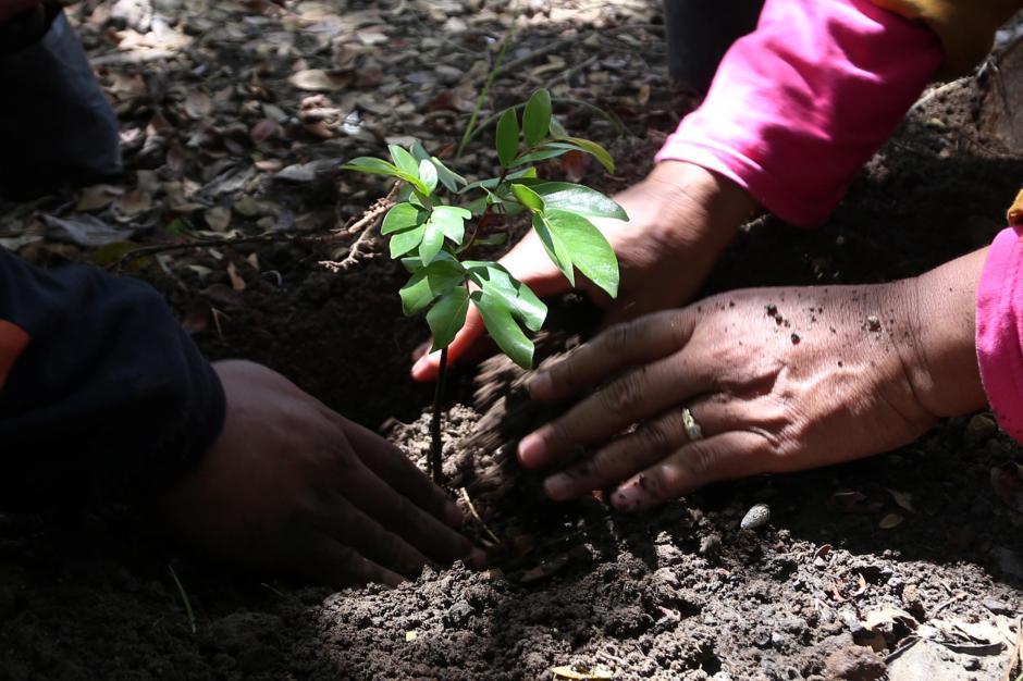 Komunitas Pecinta Alam Tanam Pohon Sapu Tangan-1