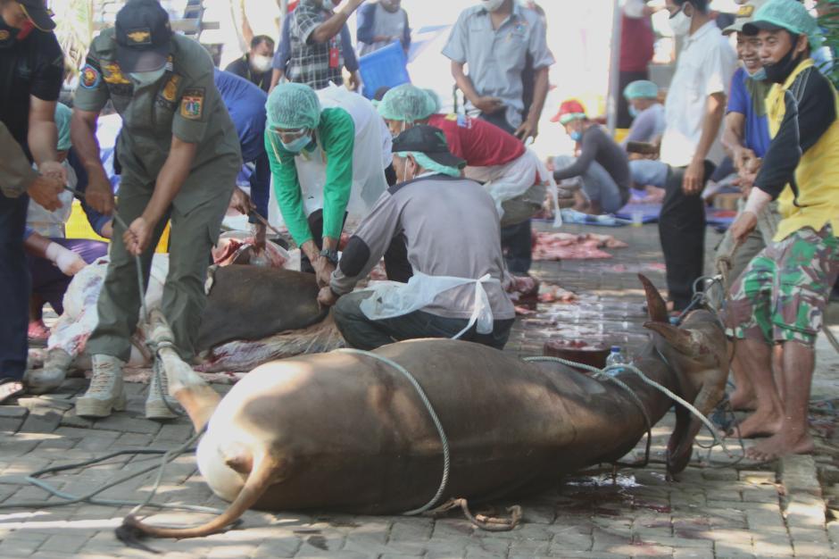 Pemotongan Hewan Kurban di Kepulauan Seribu-1