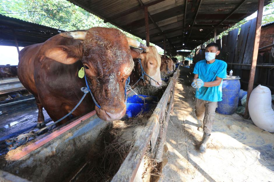 Pembagian Daging Kurban Dapat Membantu Warga Terdampak Pandemi-1