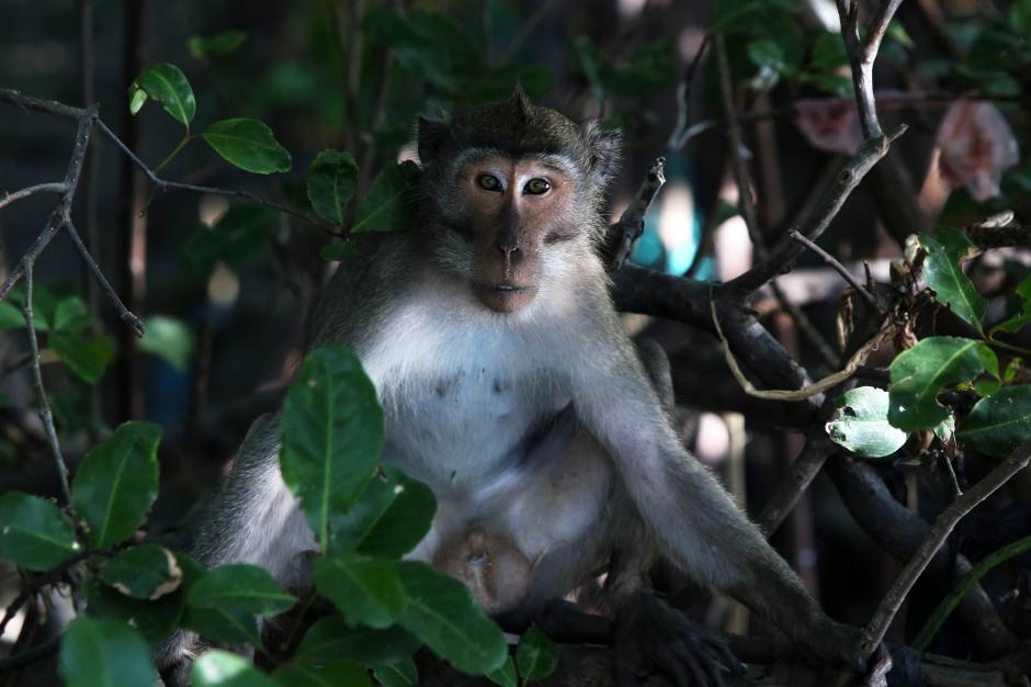 Satwa Liar di Balik Rindangnya Hutan Bakau Ekowisata Mangrove Wonorejo Surabaya-0